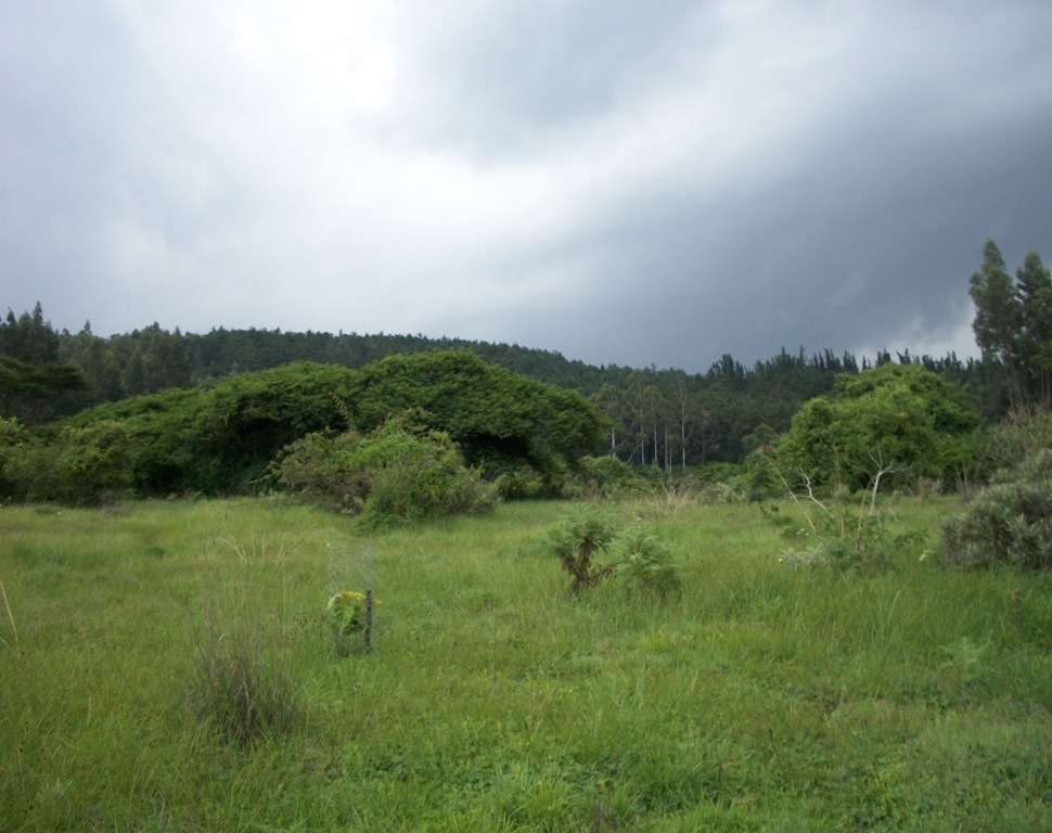 Menagesha forest
